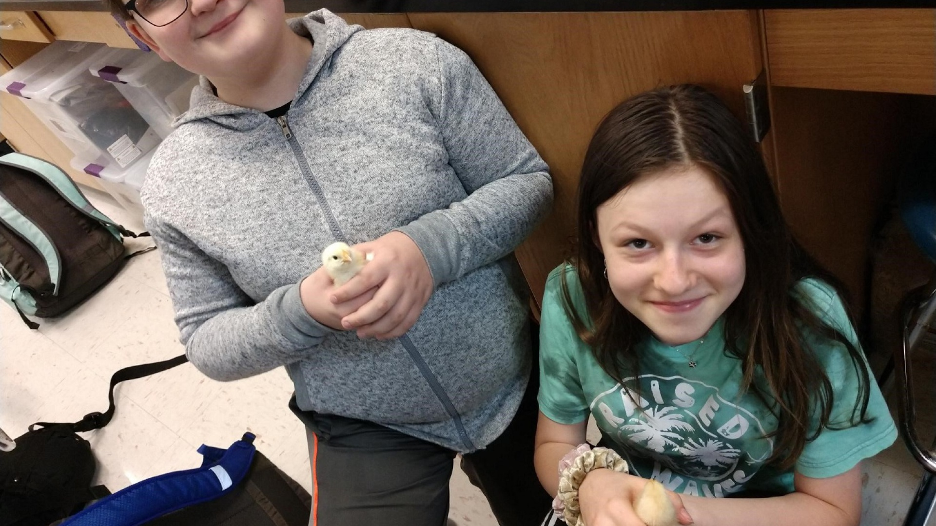 Students and the baby chickens